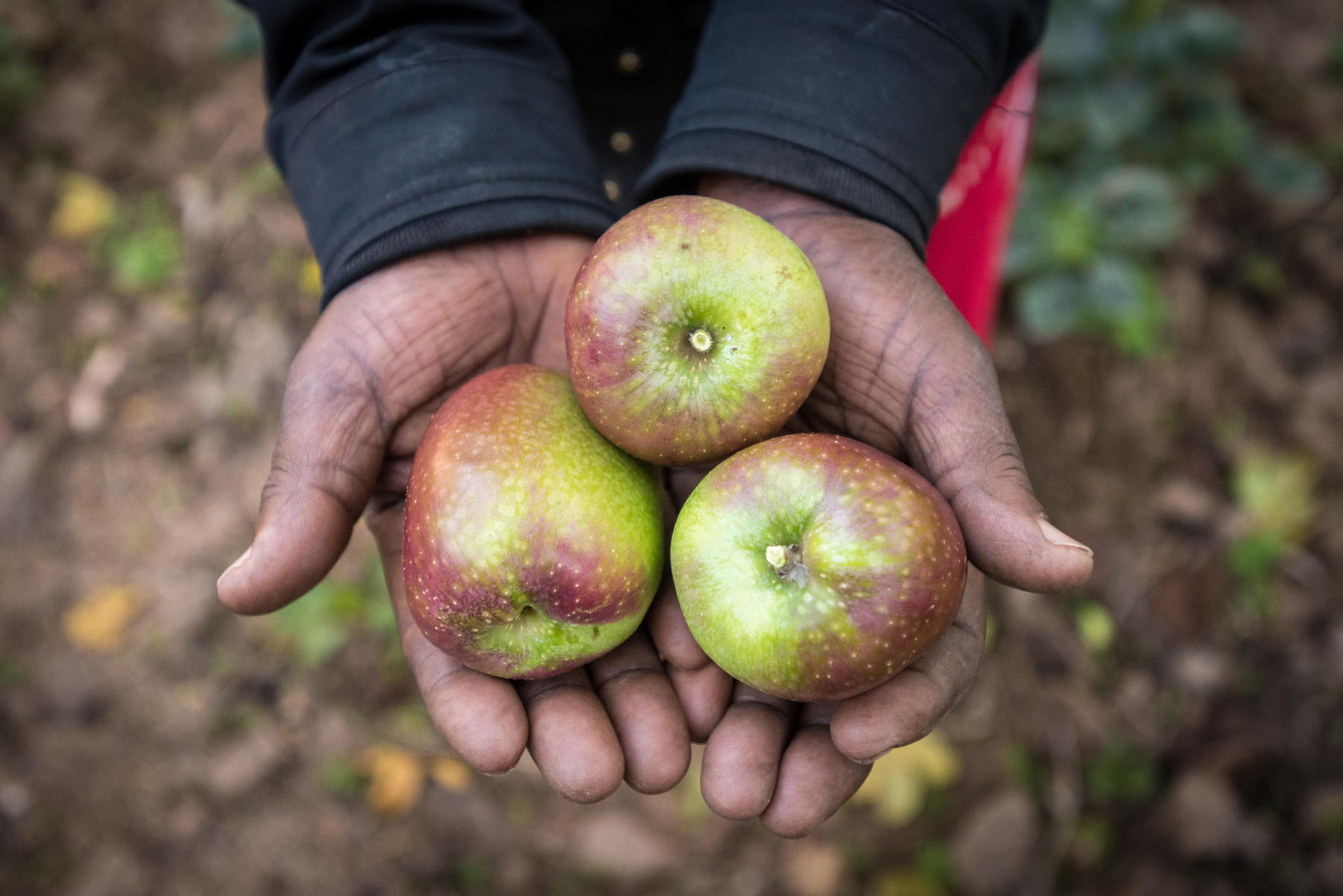 A farmer holds apples in Rwanda