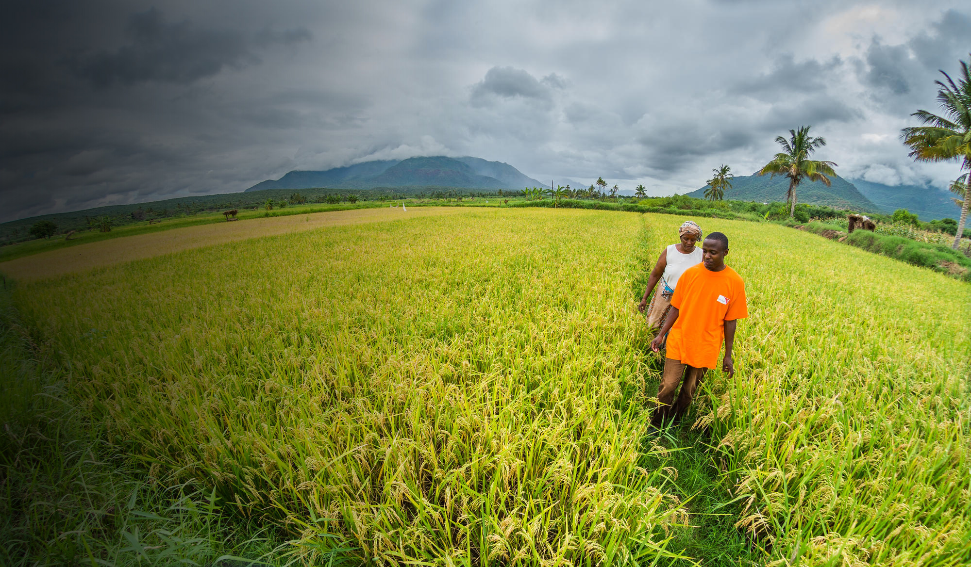 A World Vision employee walks in a field with a client in Tanzania