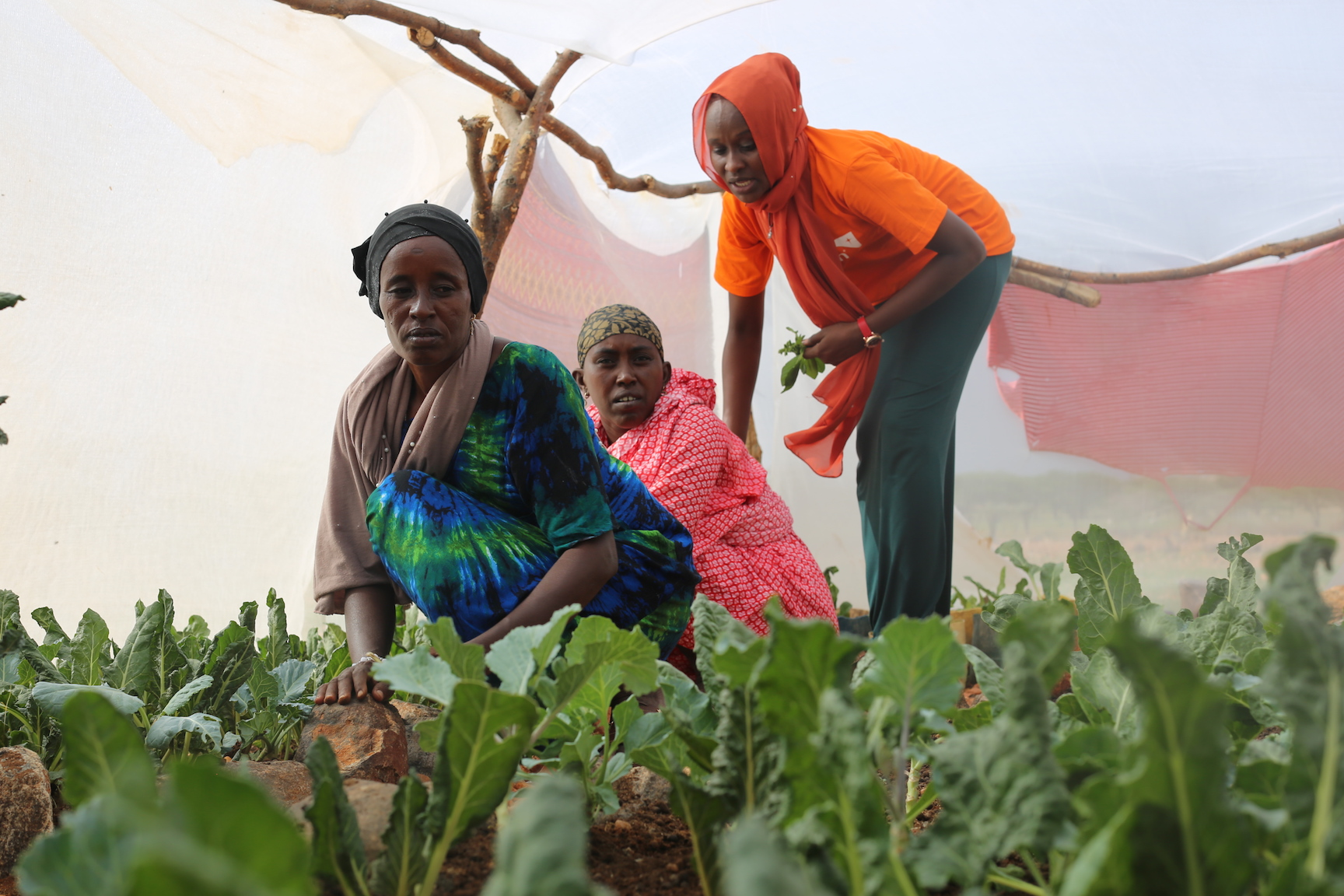 Saroi and other women in Kenya's Laisamis County that have embraced kitchen gardens. @World Vision Photo/By Irene Sinoya