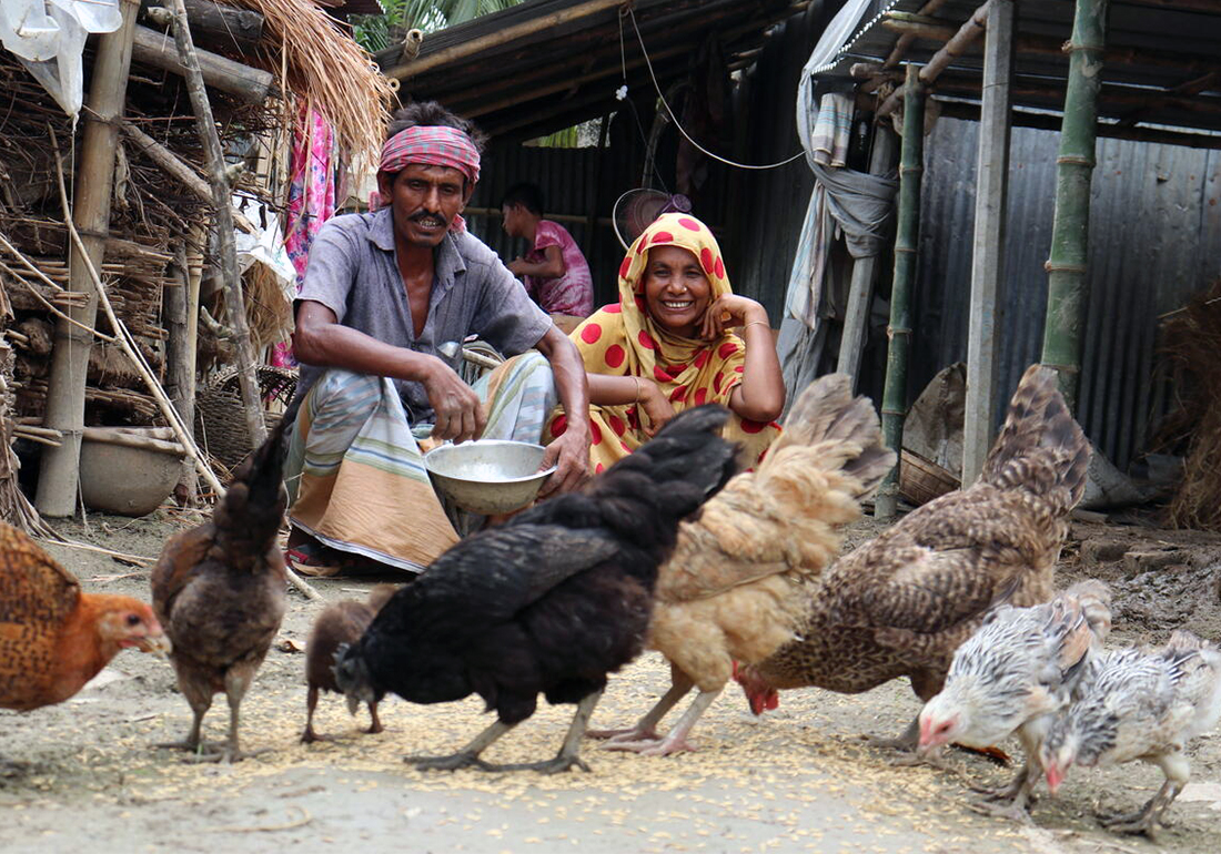 Khadija and her husband is rearing ducks and chicken and feeding them in their yard