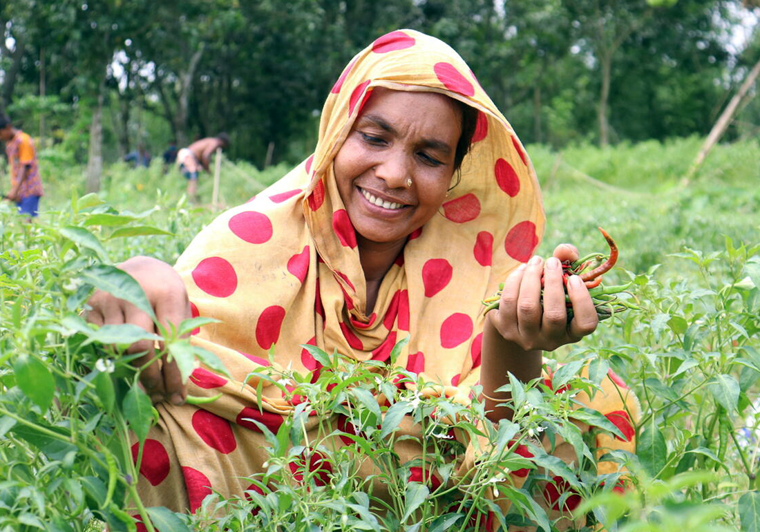 Khadija is plucking up green chilies from her home-stead garden
