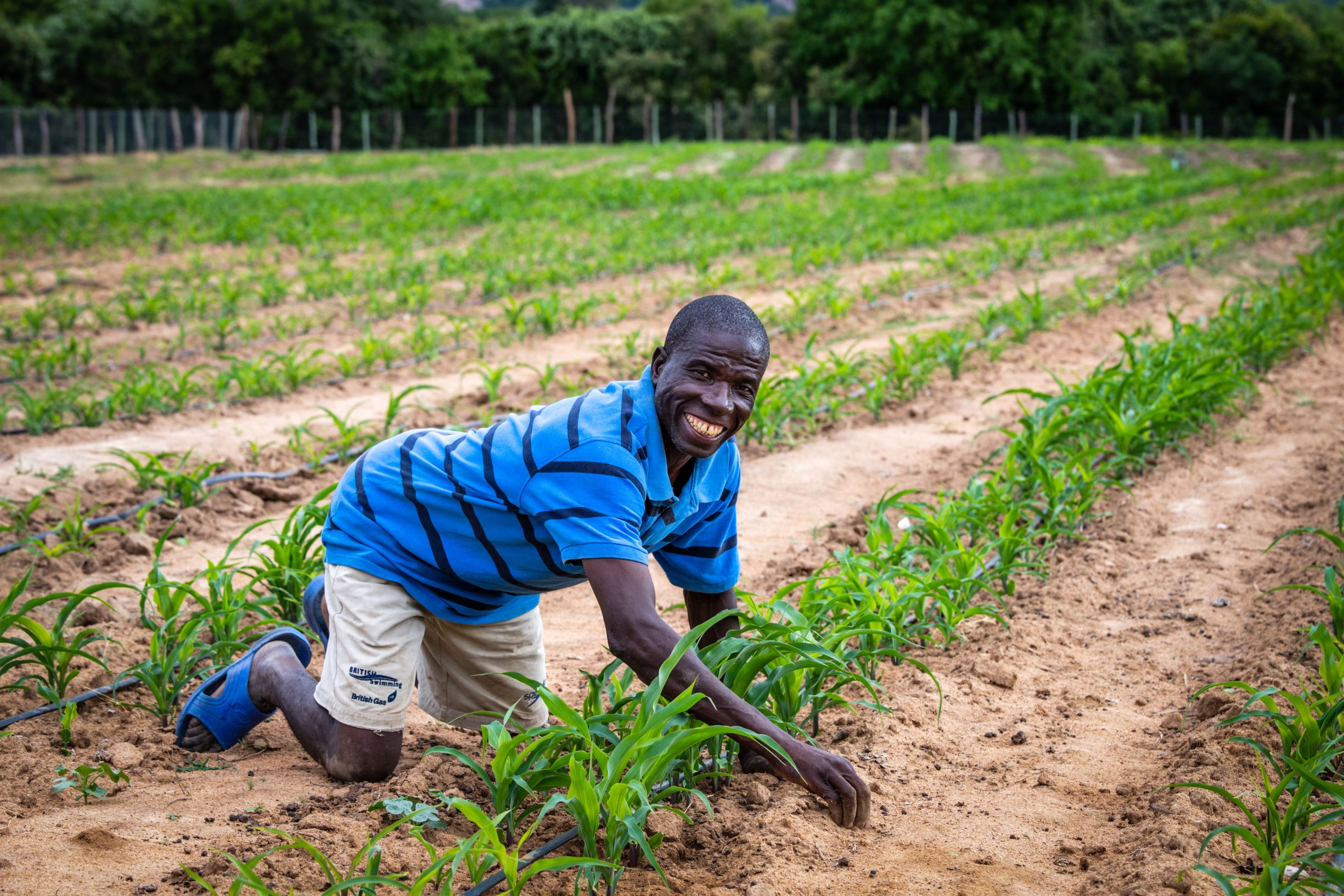 Zimbabwean man looking at his plants in his field