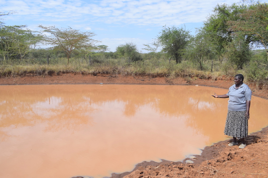 Through water harvesting, Rebecca gets sufficient water to water her crops during the dry season.