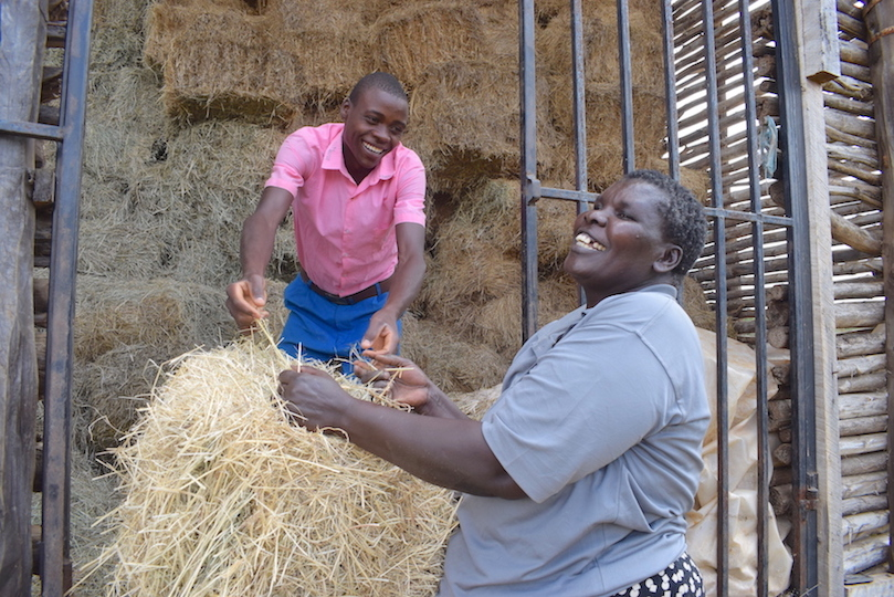 Rebecca and his son 15-year-old son Dennis. Trees in their farm promoted the growth of grass on their land. They dry the grass to make hay for use during dry seasons.