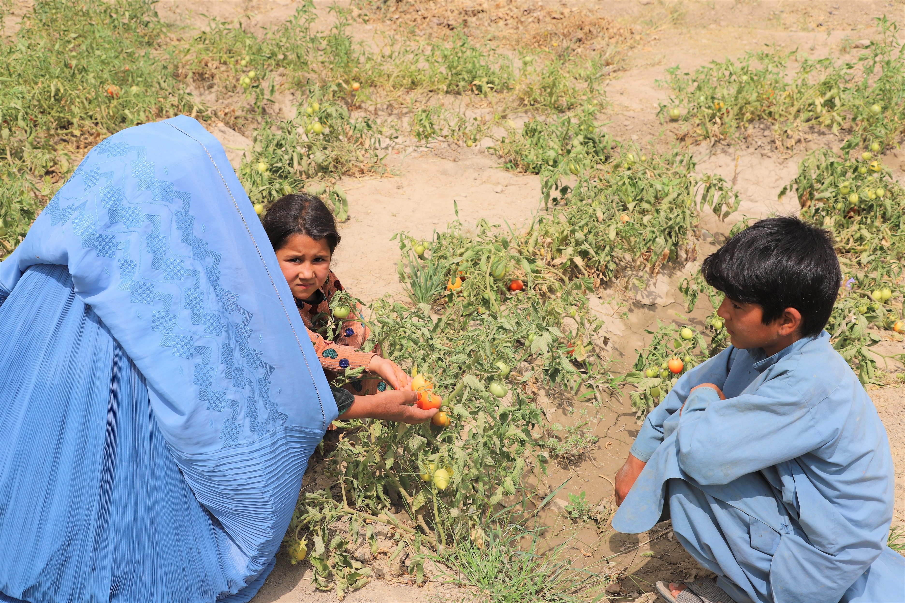 Sahar Gul and her children are in the garden of her yard.
