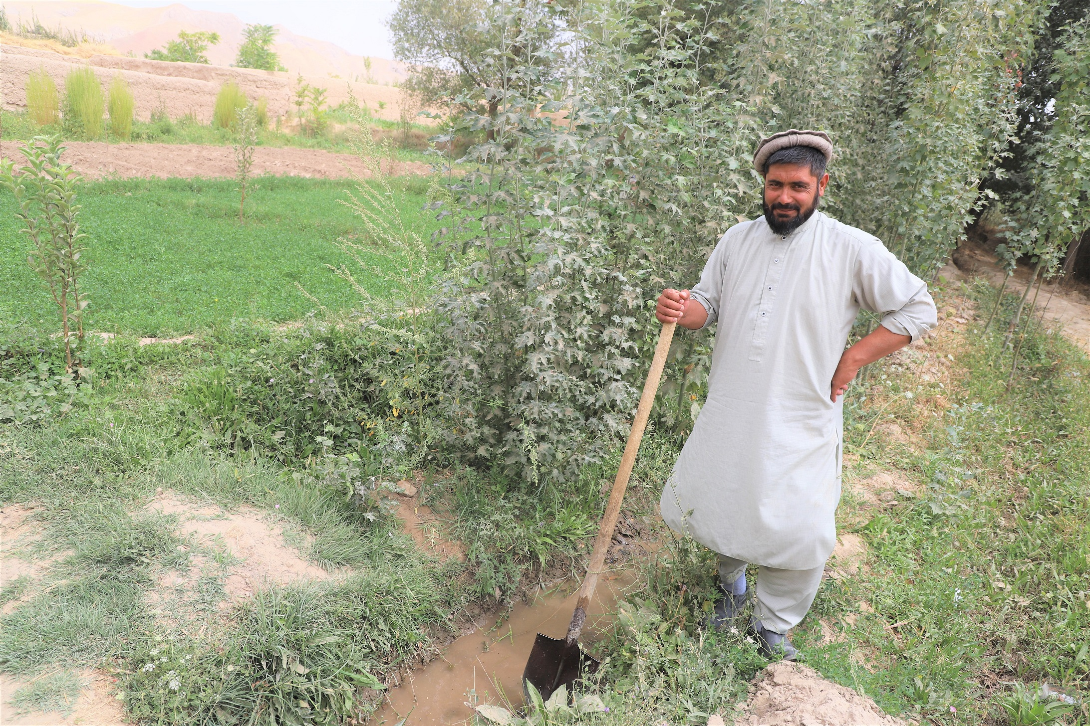 Mohammad Amin is irrigating the poplar saplings from water of Kariz.