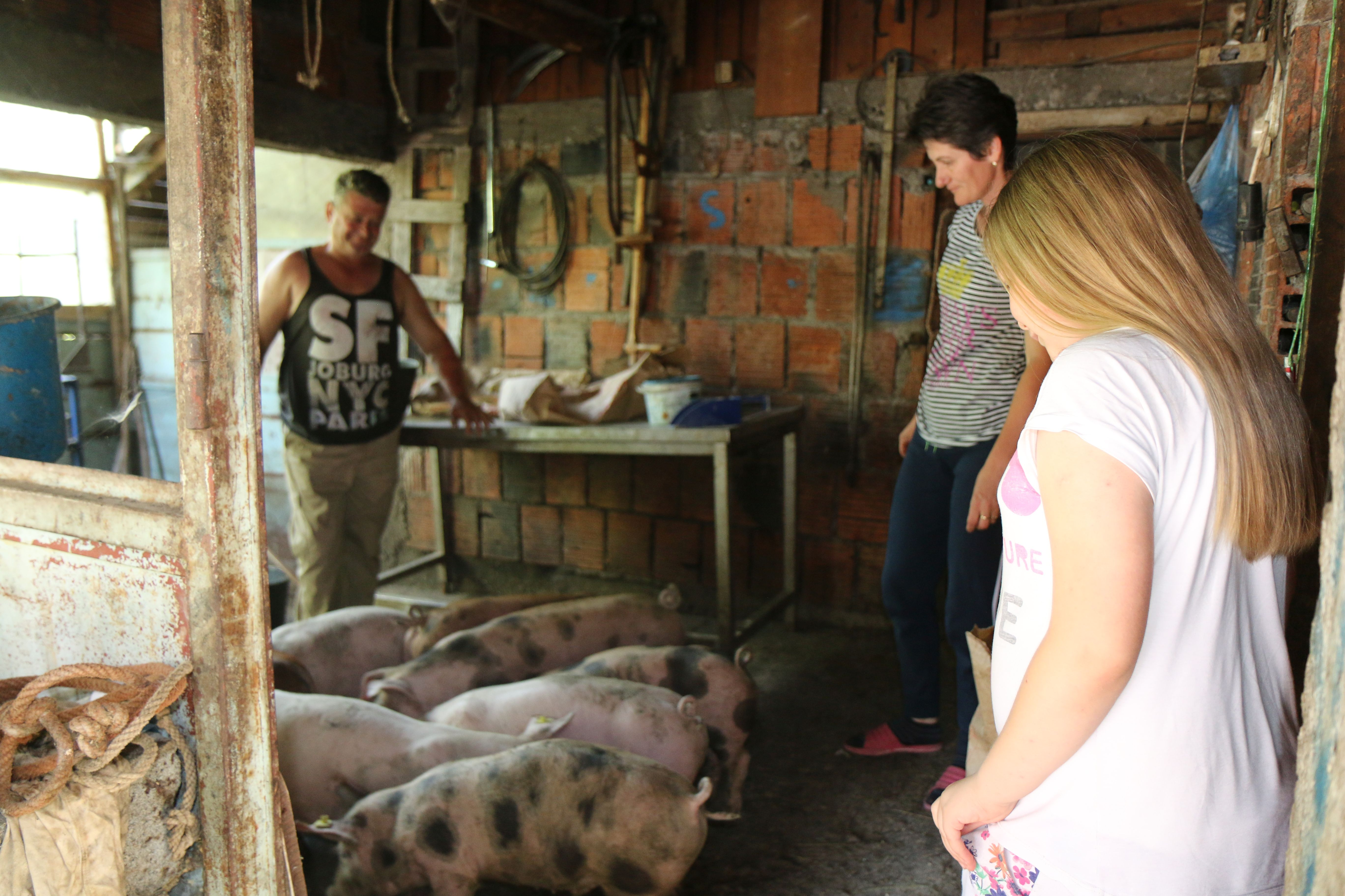 Famili Purkovic feeds the pigs