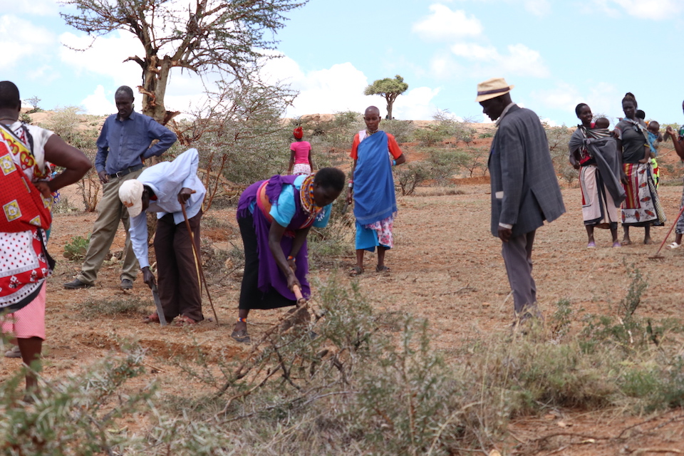 Pastoralists at Makurian in Laikipia County clearing the opuntia cactus which has prevented the growth of livestock pastures on their land.©World Vision/Photo by Wesley Koskei.