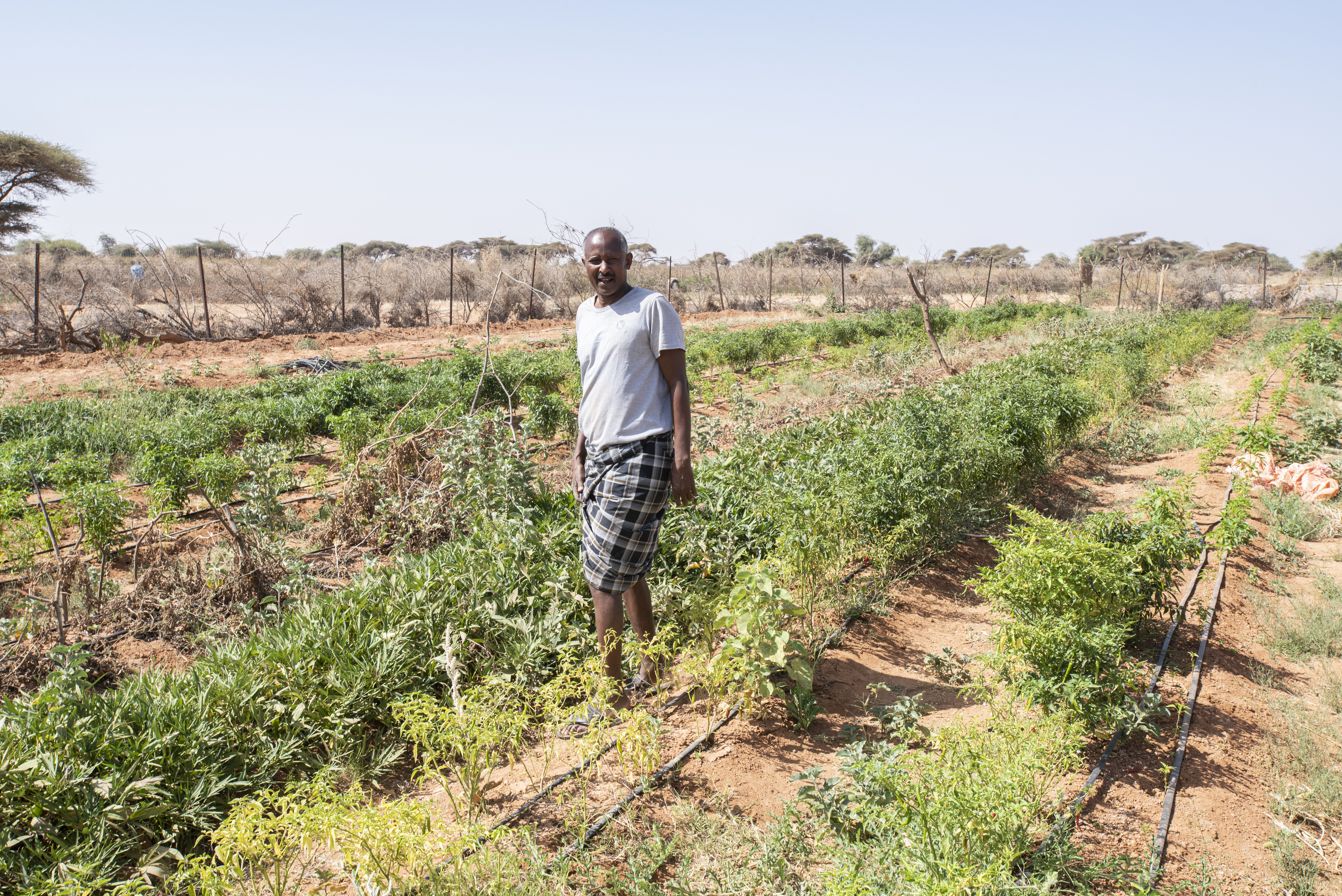 Abdi-Wali Hussein Haaji is  taking care of their vegetables garden. They benefited from World Vision good agriculture lessons, as well as seeds, tools, and water irrigation system connected to the earth dam.