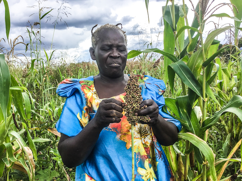 Rose Akao also grows crops like sorghum