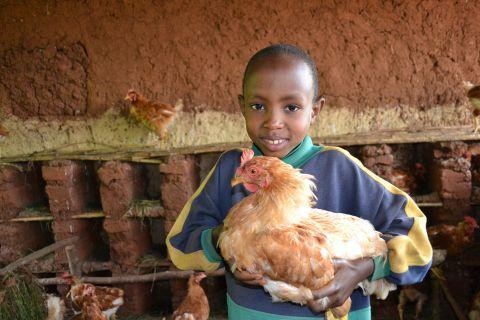 Livelihoods in Burundi