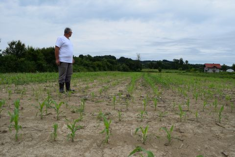 Nihad stands in the middle of his corn field that was flooded in 2014.