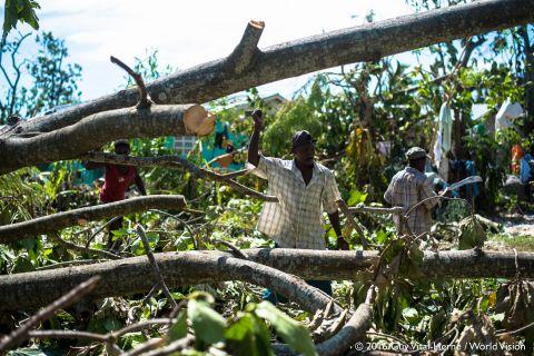 Men from St. Louis du Sud clear the road of fallen breadfruit trees