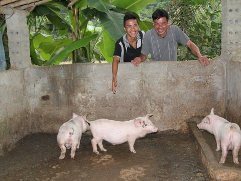 A father and son admire their pigs in their farm