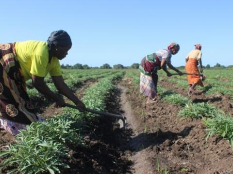 Mozambique | World Vision International