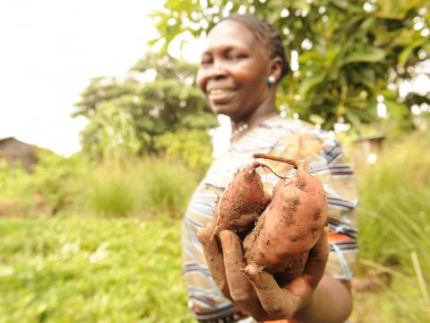 Orange Fleshed Sweet Potato-World Vision's work in Kenya for ENRICH