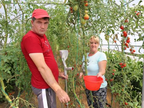 Mirsad, landmine accident survivor, helps his wife harvest the tomato.