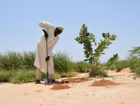 World Vision and World Food Programme fight desertification in Niger