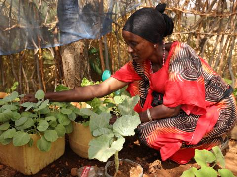 Kitchen Gardens Improve Nutrition and Household Income in Laisamis