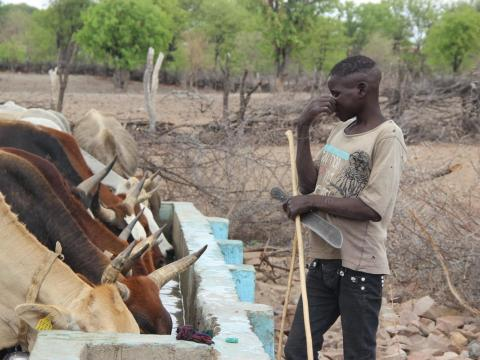 Child forced to spend months in the bush with cattle following drought in Angola
