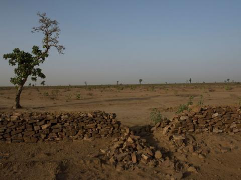 heat wave in india causes forest to shrink