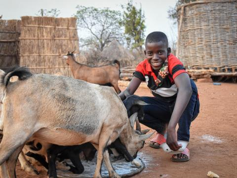 Sponsored child with goats in Mali