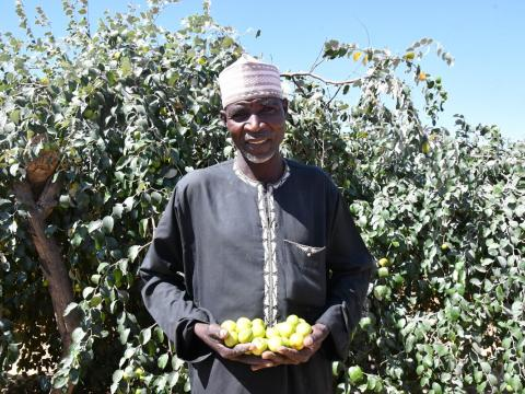 Growing Sahelian apples helped Abdoulsalam stay close to his family