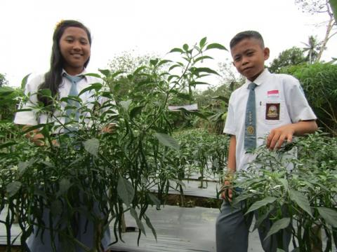 A Glimpse of Hope for the Red Chili Plantation at School