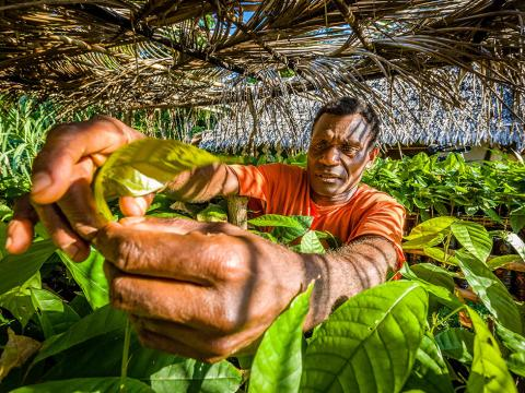 Moli, sponsored by World Vision, picks home grown cocoa beans for his delicious cholocate.