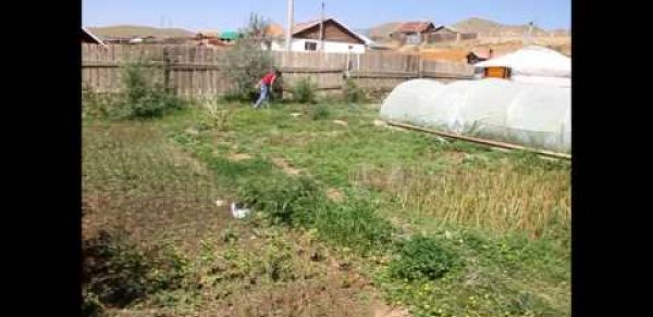 A Family Grows Organic Vegetables