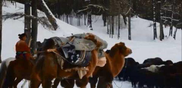 Emergency Relief for Nomadic Herders