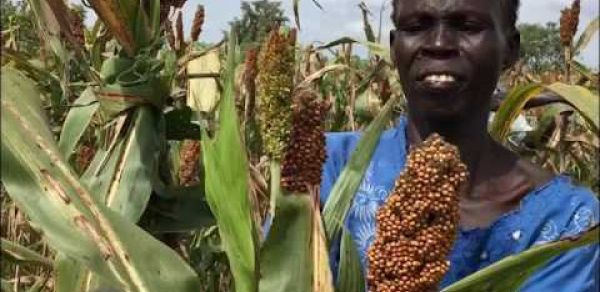 WV working with communities in South Sudan to improve food security