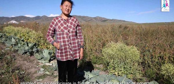 Vegetable farming in Bulgan province.