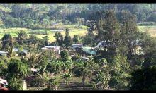 Renew The Land - FMNR in Timor-Leste